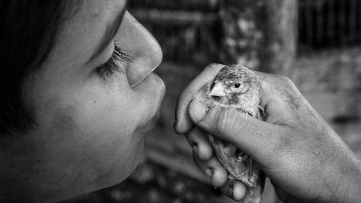 VIDEO: Tvůrci snímku Nabarvené ptáče představili první trailer