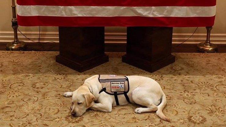 Nejsmutnější pes na světě: Labradora Sullyho od zesnulého George Bushe teď čeká nový osud