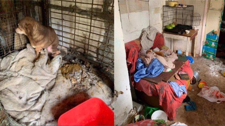 Domácnost hrůzy: Holčičku (6) rodiče vychovávali v zaneřáděné množírně psů