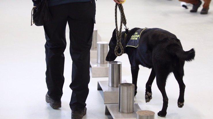 Psi dokáží identifikovat koronavirus do 10 sekund: Lidé s nimi nemusí ani přijít do styku