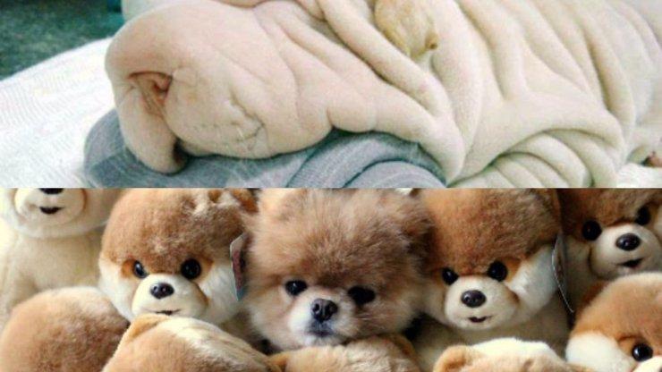 Najdi zvíře: 12 případů hodně vtipné kamufláže roztomilých domácích mazlíčků