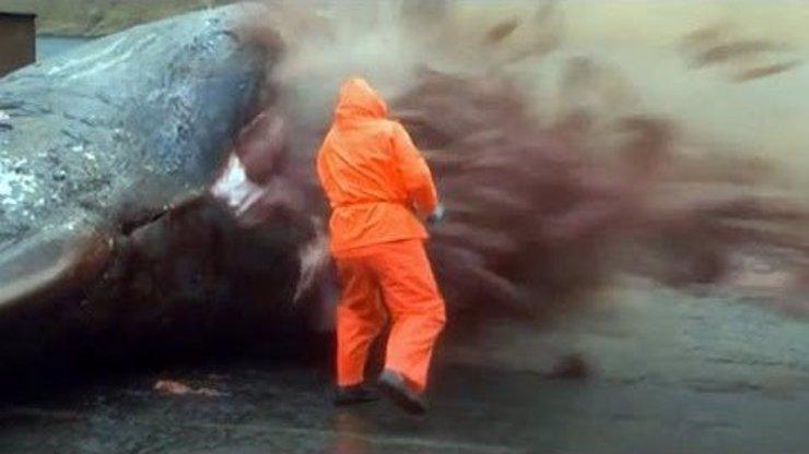 Video pro silné žaludky: Velryba exploduje přímo do obličeje mořského biologa