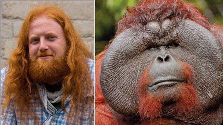 Člena Greenpeace znásilnil orangutan! Lákaly ho jeho oranžové vlasy!