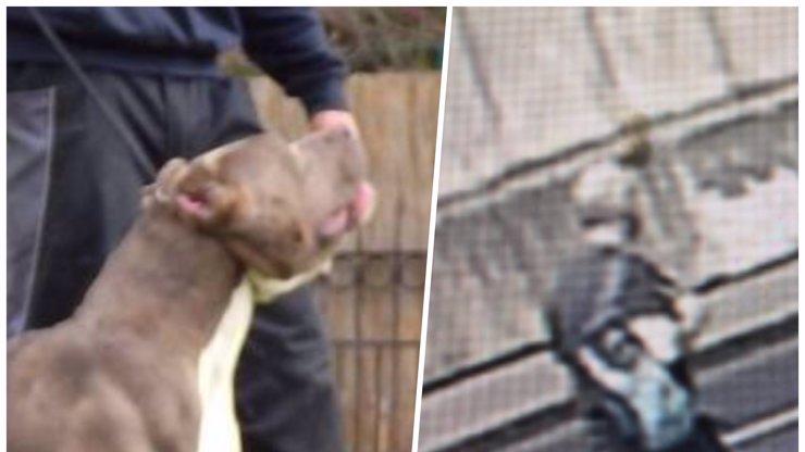 Detaily napadení chlapečka (4) na Petříně: Pes se mi vytrhl a šel si s tím dítětem hrát
