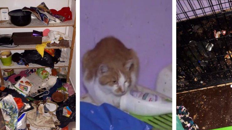 Zrůdná pomocnice útulku: V bytě měla haldy mrtvých koček, cpala je i do mrazáku