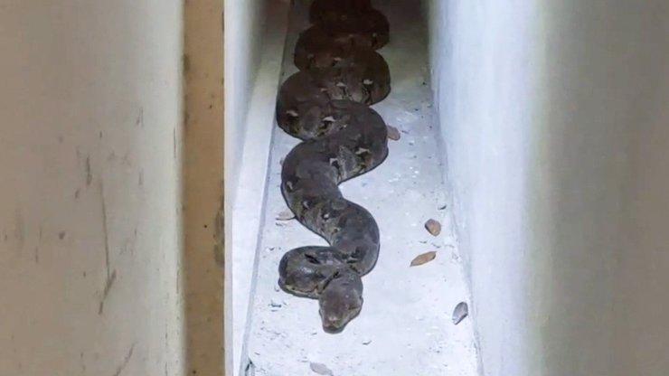 Ženu vyděsil obří plaz: Odchyt pětimetrového hada sledovala celá vesnice