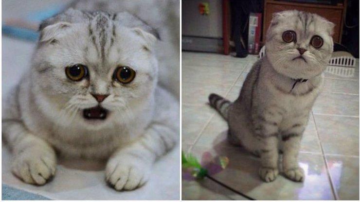 Chcete vidět absolutně nejsmutnější kočičku na celém širém světě? Tohle je ona! A vypadá vážně smutně!