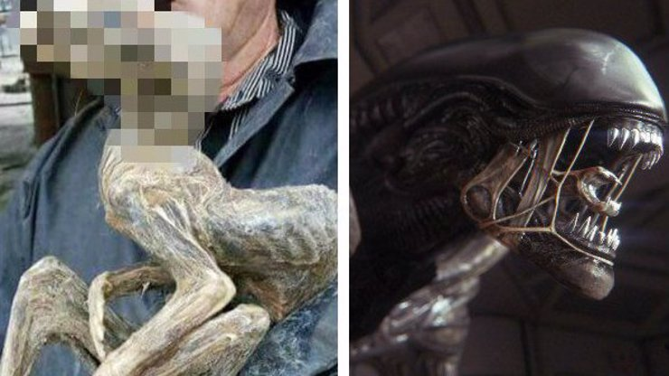Co to proboha je? Našlo se zvíře, které vypadá jako hororový Vetřelec!