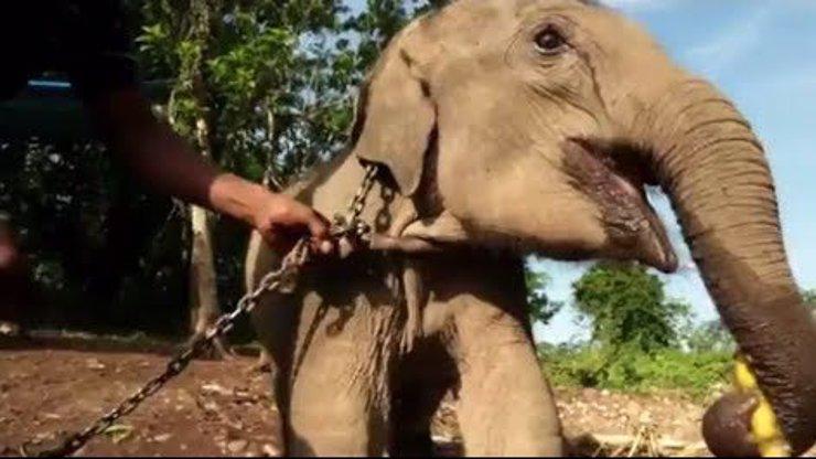 Video, které vás zvedne ze židle: Dojemný příběh slůněte Raji