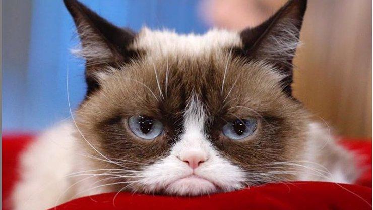 Nejslavnější kočka na světě zemřela: Grumpy Cat bude chybět milovníkům memů