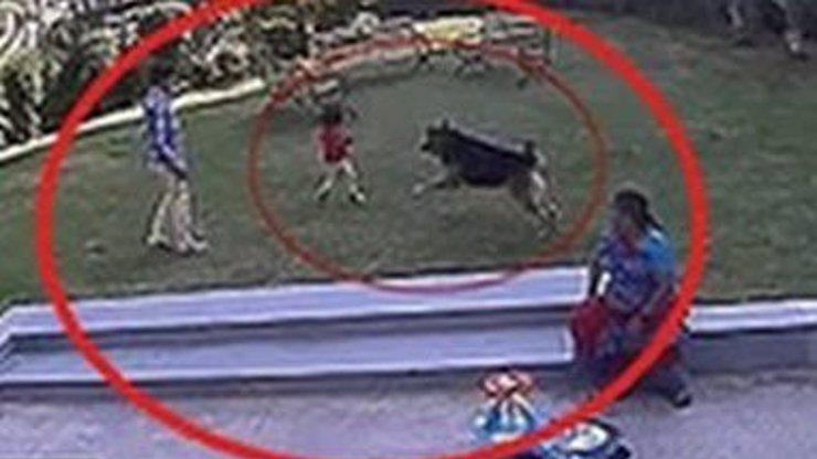 Video: Starší bratr bojoval se psem o život své malé sestry. Zachoval se jako opravdový hrdina!