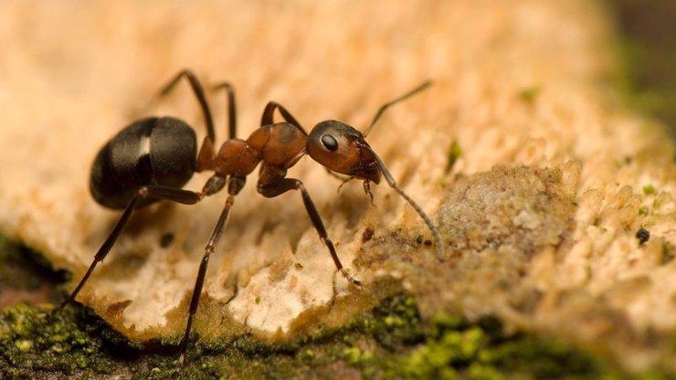ZLO jménem mravenci: Jak je v domácnosti zlikvidovat navěky?