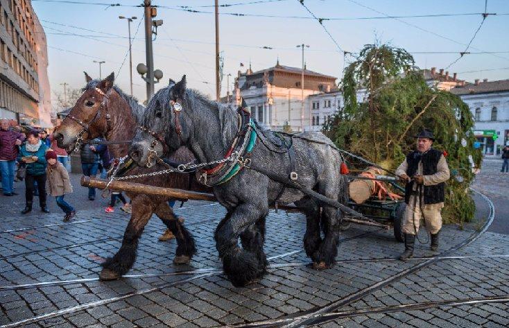 Souboj vánočních stromků: Které město má ten nejhezčí? Nejvíc si fandí Brno
