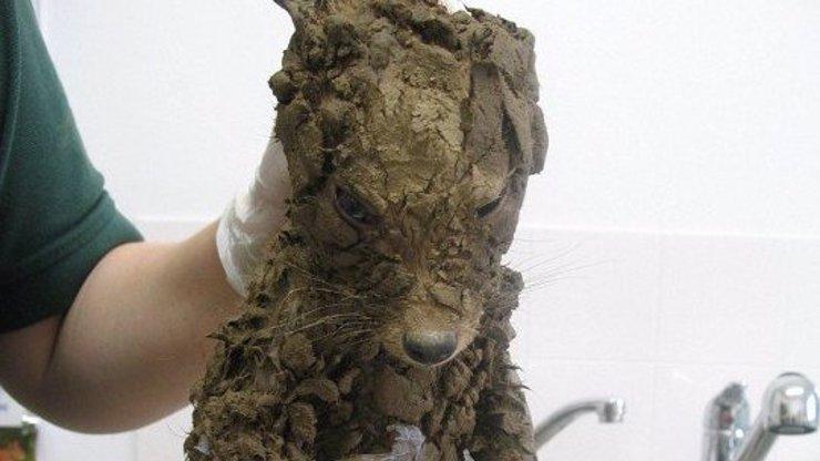 Tohohle tvorečka zachránili od jisté smrti: Když ho umyli, dost se podivili!