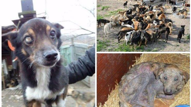 Fotky plné utrpení: Týraní psi z ukrajinského útulku čekají na novou rodinu. Adoptovat si je můžete i vy!