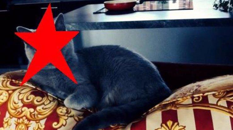 Největší kočka kontroverzní rodiny Štikových? Je to tahle mlsná chlupatice, pózující na luxusní pozlacené pohovce!