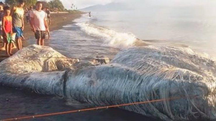 Záhadné monstrum: Moře vyvrhlo podivné tělo, má jít o špatné znamení! VIDEO