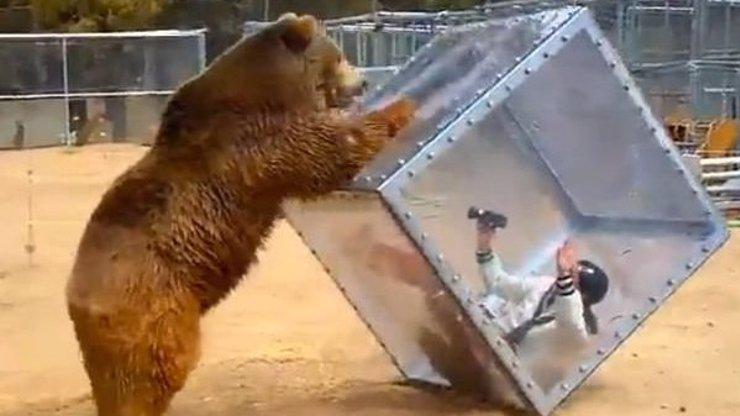 Agresivní medvěd si hraje se ženou v plastovém boxu! Takhle vypadá zábava v Japonsku!
