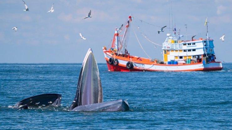 Víkendové pořady na Discovery jsou oslavou Světového dne oceánů