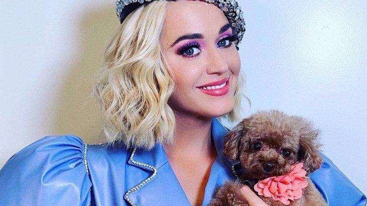 Vlna kritiky na hlavu Katy Perry: Ze svého psa chce udělat vegana, fanoušci běsní