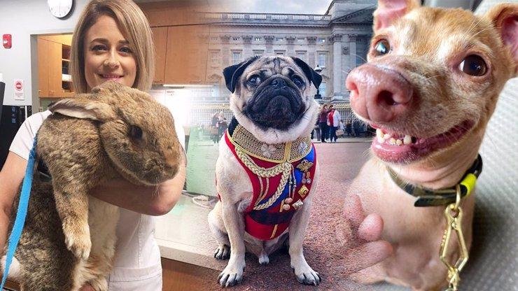 Ftefan Fofola a další báječní chlupáči: 11 nejslavnějších zvířat na Instagramu