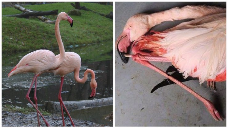 Rodiče dětí, které ubily plameňáka v jihlavské zoo, skončili po jedné brigádě! Zoo chystá podat žalobu!