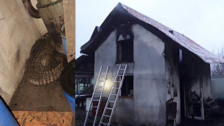 Tomu neuvěříte! Na hasiče při likvidaci požáru na Šumpersku vykoukl nebezpečný třímetrový plaz