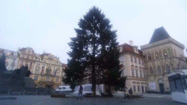 Zatím je to koště, krásu vykouzlí světla! Praha má vánoční stromek