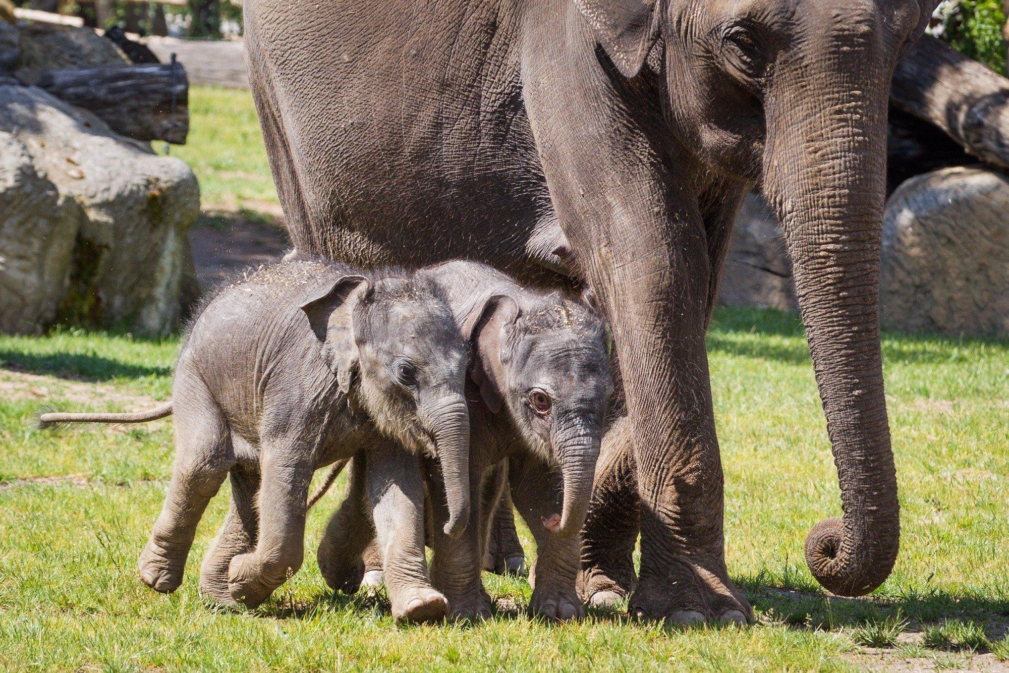 Vlna rozvolnění přehledně: Mění se pravidla pro zoo, koupaliště i hromadné akce