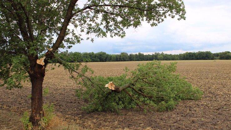 Smrtící vichr na Slovensku: Na skupinu školáků spadl strom, čtrnáctiletý chlapec nepřežil