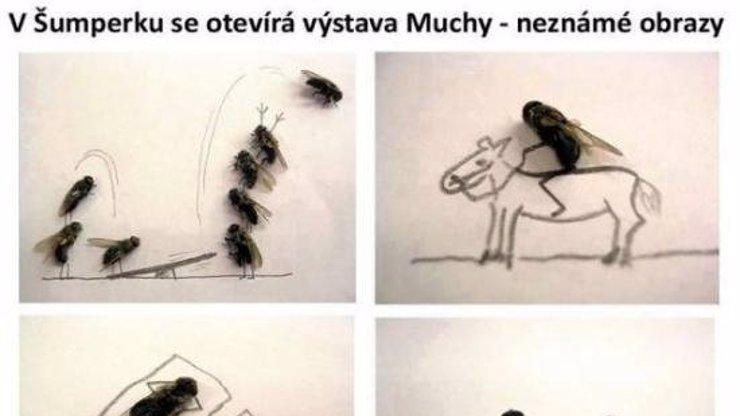 V Šumperku se otevírá výstava Muchy - nové a dosud neznámé obrazy!