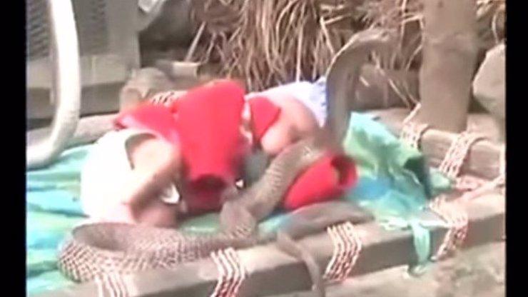 Z toho se vám zježí vlasy! Miminko spí mezi čtyřmi kobrami a nikdo nezasáhne!