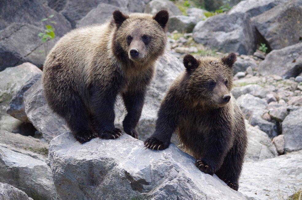 Chlapci (12) šlo v Itálii o život: Děsivé video ukazuje, jak se vyhnul medvědovi