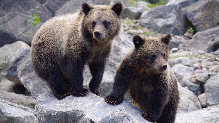 Otřesný případ: Pytlák na Slovensku zabil medvídě, prostřílel mu nohy a nechal ho v potoce