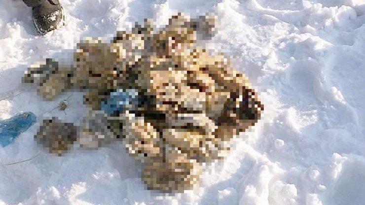 Hororový nález: Ve sněhu leželo 54 uřezaných rukou! Tady jsou děsivé detaily