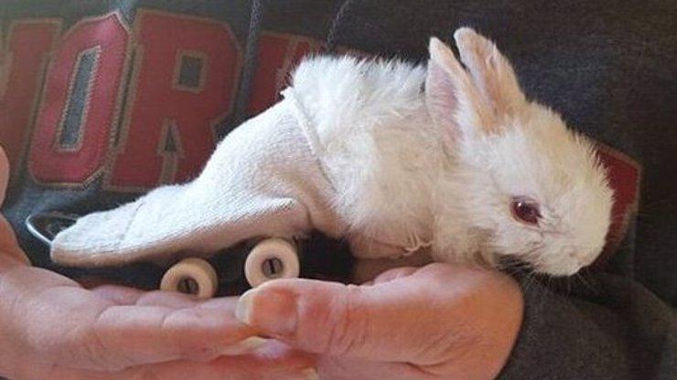 VIDEO: Ochrnutý králíček má svůj invalidní vozík. Malý skateboard!