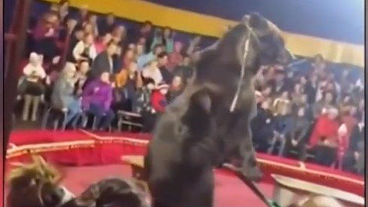 VIDEO: Medvěd v cirkuse brutálně napadl svého trenéra před zraky dětí