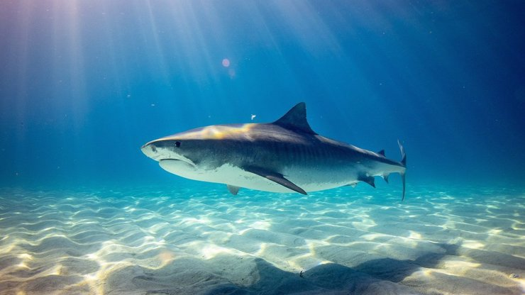 Desetiletého chlapce napadl žralok: Stáhl ho z lodi a poranil mu hlavu