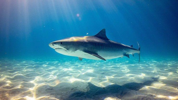 Strašlivý útok žraloka v oblíbené destinaci Čechů: 12letému chlapci sežral ruku