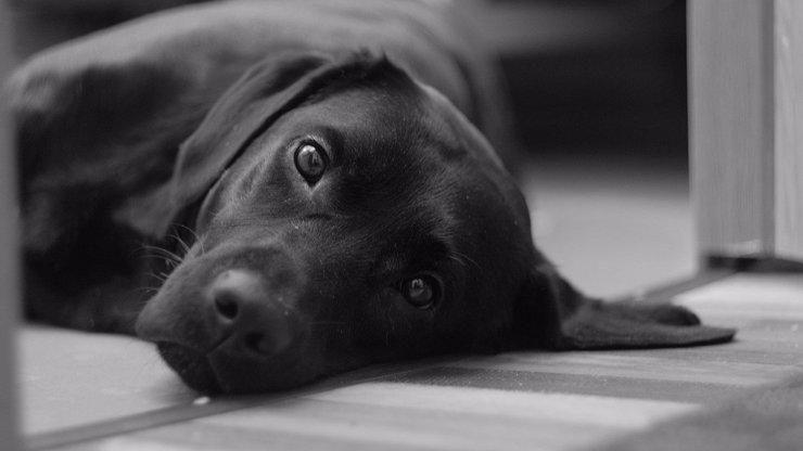 Muž z Ostravy svázal psovi přední tlapky: Majitel tvrdí, že mu pořád utíkal