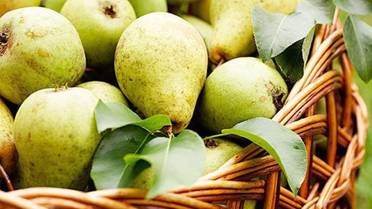 Zázračné ovoce? Tohle je 8 důvodů, proč byste měli jíst obyčejné hrušky!
