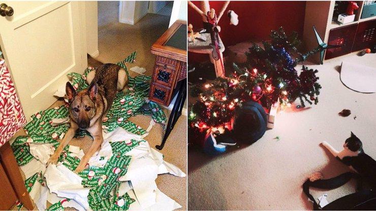 Tohle je nejvíc: 14 mazlíků, kterým jsou celé Vánoce ukradené!
