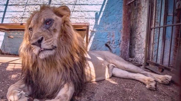 ZOO HRŮZY: Zvířata žila v odporných klecích, neznala nic jiného než beton a mříže