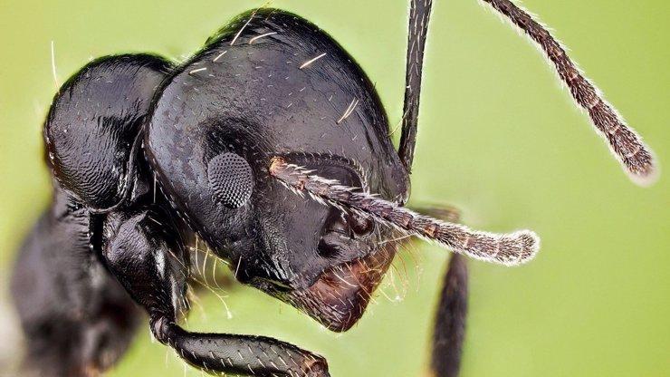 Jak to vidí mravenec: Pozoruhodné vnímání života mnoha úhly pohledu