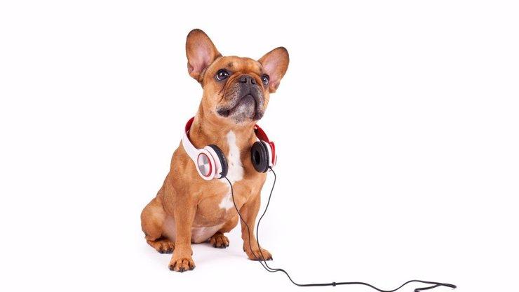 Jaká hudba dělá vaše domácí mazlíčky nejšťastnější? Budete se divit!