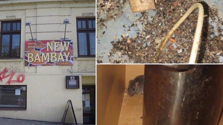 Indickou restauraci v Brně zavřeli: Kuchaři se brodili v TRUSU, přes ruce jim běhaly MYŠI!