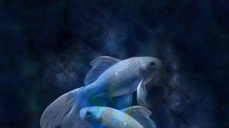 Slunce vchází do snivých Ryb: Raky čekají výbuchy emocí, Panny štěstí v lásce