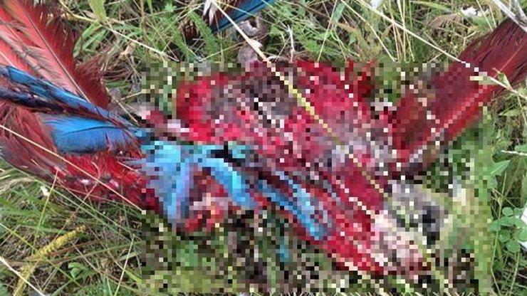 Mezi troskami malajsijského letadla a kusy těl ležely mrtvoly vzácných ptáků