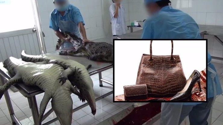 Milujete luxusní kabelky z krokodýlí kůže? Tak se podívejte, jak se vyrábějí. Video není pro citlivé povahy