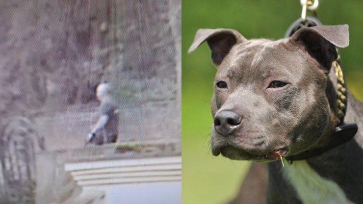 Utraťte majitele, ne psa, zuří lidé: Chlapeček (4) bojuje o život, zbabělý páníček se schovává